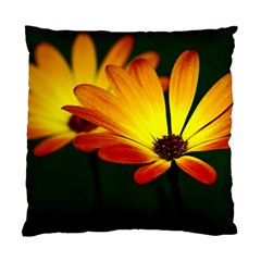 Osterspermum Cushion Case (Two Sided)