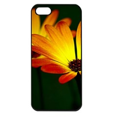 Osterspermum Apple iPhone 5 Seamless Case (Black)