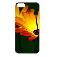 Osterspermum Apple iPhone 5 Seamless Case (White)