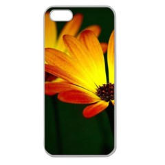 Osterspermum Apple Seamless iPhone 5 Case (Clear)