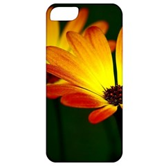 Osterspermum Apple iPhone 5 Classic Hardshell Case
