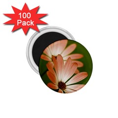 Osterspermum 1 75  Button Magnet (100 Pack)