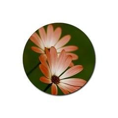 Osterspermum Drink Coaster (Round)