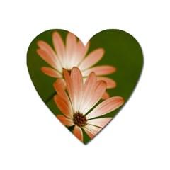 Osterspermum Magnet (heart)