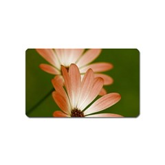 Osterspermum Magnet (Name Card)