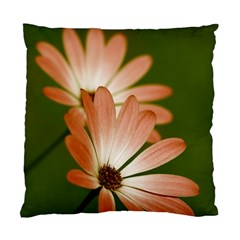 Osterspermum Cushion Case (single Sided)