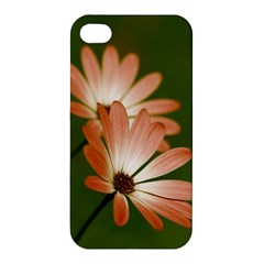 Osterspermum Apple iPhone 4/4S Premium Hardshell Case