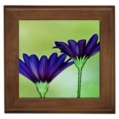 Osterspermum Framed Ceramic Tile