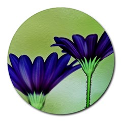 Osterspermum 8  Mouse Pad (Round)