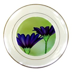 Osterspermum Porcelain Display Plate