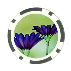 Osterspermum Poker Chip