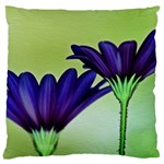 Osterspermum Large Cushion Case (Two Sided)  Front