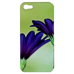 Osterspermum Apple Iphone 5 Hardshell Case