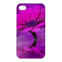 Osterspermum Apple Iphone 4/4s Hardshell Case