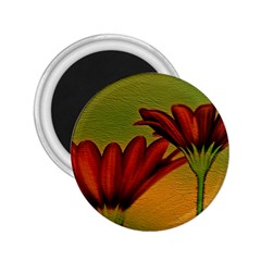 Osterspermum 2.25  Button Magnet