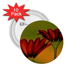 Osterspermum 2 25  Button (10 Pack)