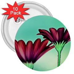 Osterspermum 3  Button (10 pack)