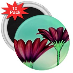 Osterspermum 3  Button Magnet (10 pack)