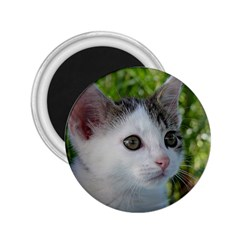 Young Cat 2.25  Button Magnet