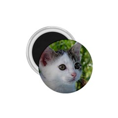 Young Cat 1 75  Button Magnet