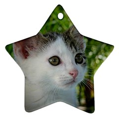 Young Cat Star Ornament