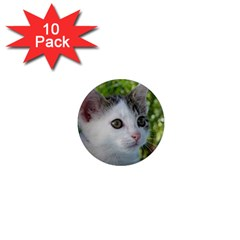 Young Cat 1  Mini Button Magnet (10 Pack)