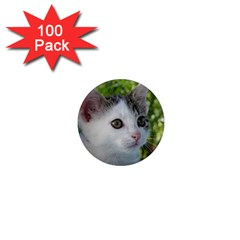 Young Cat 1  Mini Button Magnet (100 Pack)