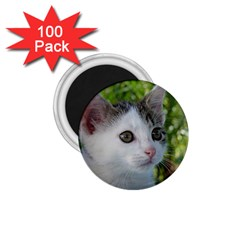 Young Cat 1 75  Button Magnet (100 Pack)