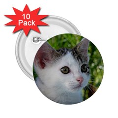 Young Cat 2.25  Button (10 pack)