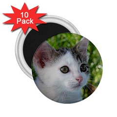 Young Cat 2.25  Button Magnet (10 pack)