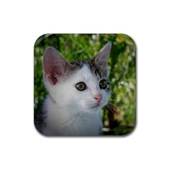 Young Cat Drink Coasters 4 Pack (square)