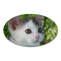 Young Cat Magnet (Oval)