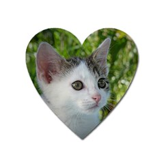 Young Cat Magnet (heart)