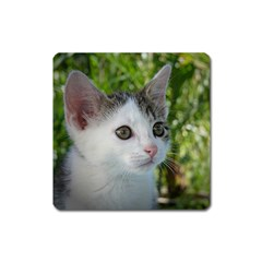 Young Cat Magnet (Square)
