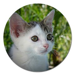 Young Cat Magnet 5  (Round)