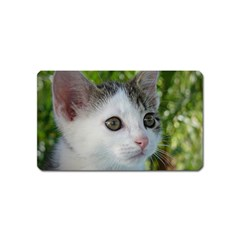 Young Cat Magnet (Name Card)