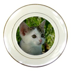 Young Cat Porcelain Display Plate