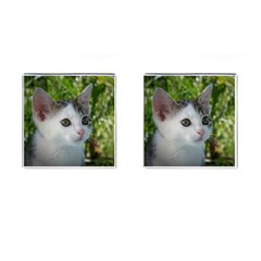 Young Cat Cufflinks (Square)