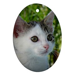 Young Cat Oval Ornament (Two Sides)