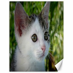 Young Cat Canvas 12  X 16  (unframed)