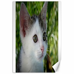 Young Cat Canvas 20  x 30  (Unframed)