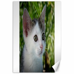 Young Cat Canvas 24  X 36  (unframed)