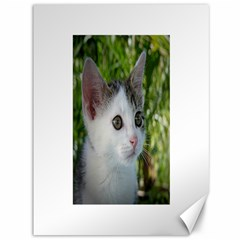 Young Cat Canvas 36  x 48  (Unframed)