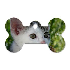 Young Cat Dog Tag Bone (Two Sided)