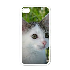 Young Cat Apple iPhone 4 Case (White)