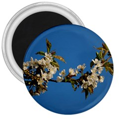 Cherry Blossom 3  Button Magnet