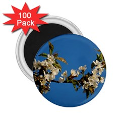 Cherry Blossom 2.25  Button Magnet (100 pack)