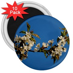 Cherry Blossom 3  Button Magnet (10 Pack)