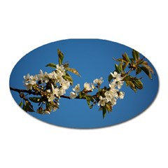 Cherry Blossom Magnet (oval)