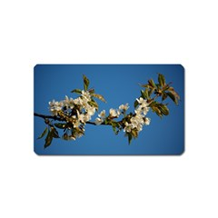 Cherry Blossom Magnet (name Card)